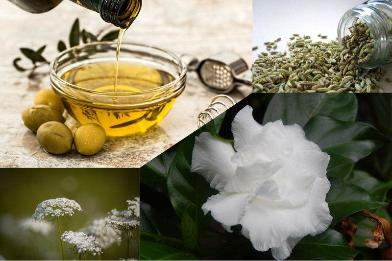 Tanaman herba ini bisa bantu terapi pasien COVID-19