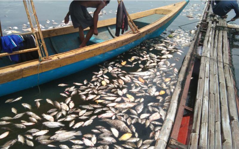 Ikan yang mati di Waduk Jangari capai 200 ton dalam beberapa hari