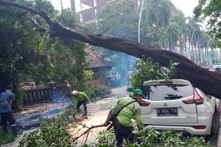 Pemkot Jakbar pangkas 1.068 pohon untuk antisipasi musim hujan