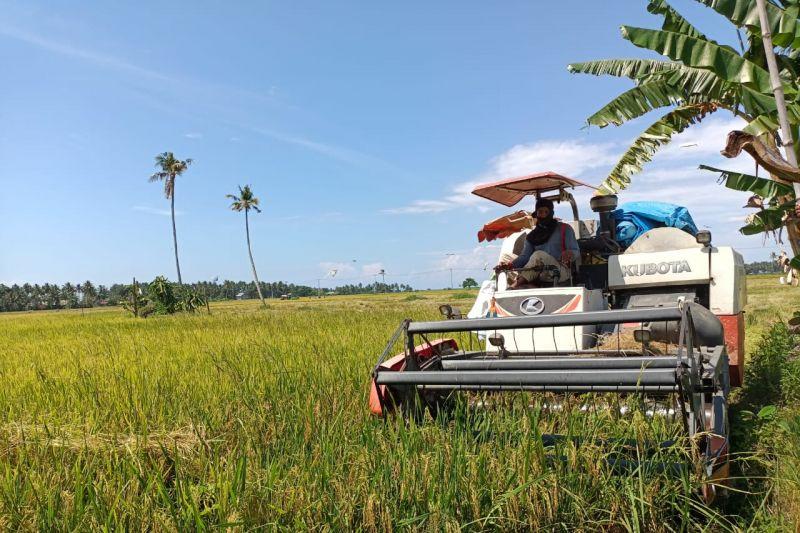 Petani di Kolaka mulai panen padi